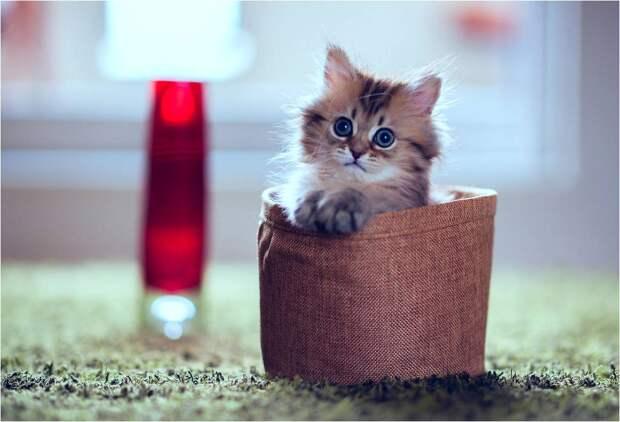 Классная подборка картинок с котятами