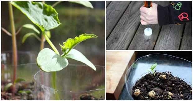 Как сделать самополивающийся горшок для семян и рассады? Всё гениальное просто