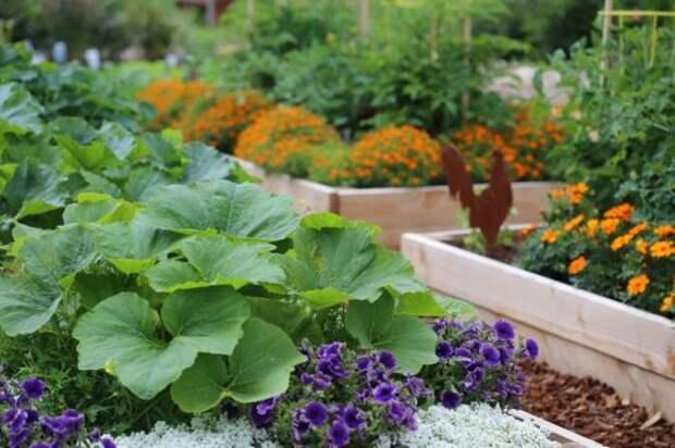 Как защитить огород от сглаза соседей