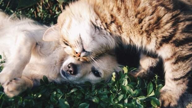 Эксперты MyAnimals рассказали о безопасном знакомстве кошки с собакой