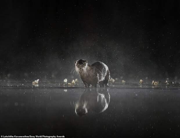 Лучшие снимки с конкурса Sony World Photography Award 2020