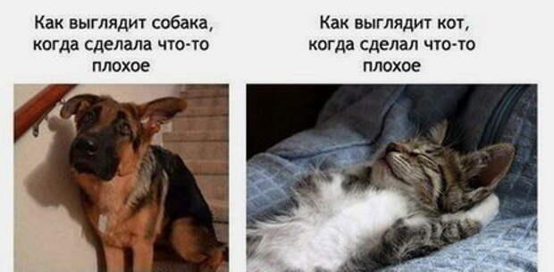 пес и кот напакостил