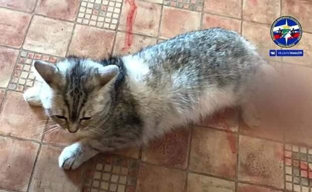 Застрявшую в окне кошку спасли в Новосибирске