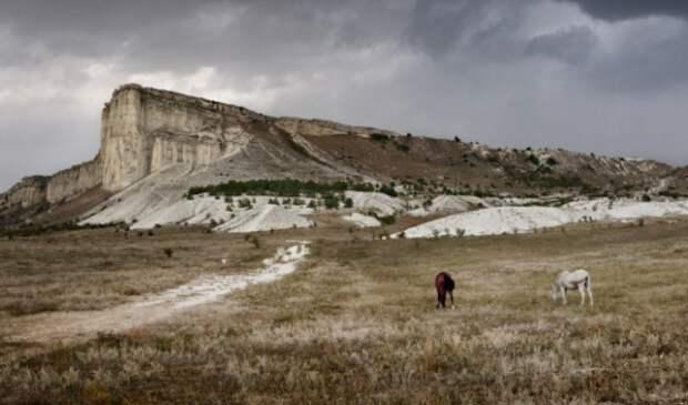 В Крыму не используется более 100 тысяч гектар земли