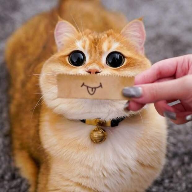 Кот с нарисованной улыбкой