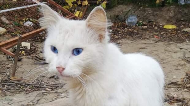 Брошенный хозяевами кот поселился на теплотрассе. Когда его приютили, выяснилось, что он серьезно болен