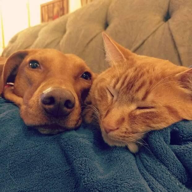 Всегда вместе видео, домашний питомец, животные, кот, милота, собака