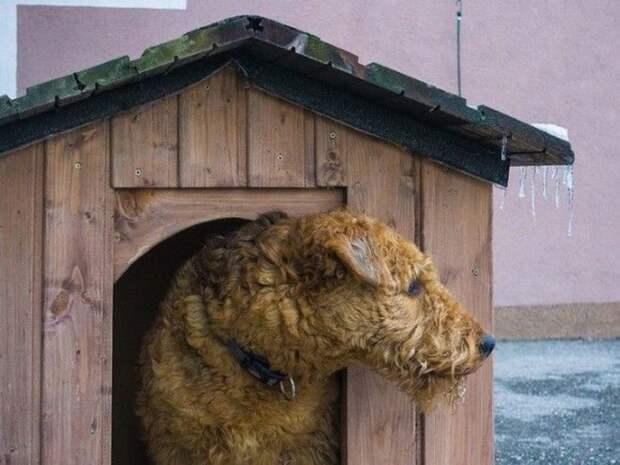 «Юридический казус»: буквальная трактовка запрета курятника на садовом участке может касаться даже кошек и собак