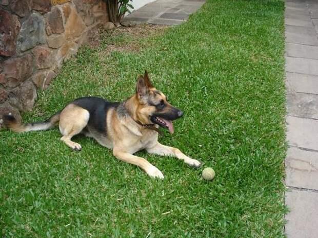 Байден признался, что получил переломы ноги, пытаясь схватить собаку за хвост
