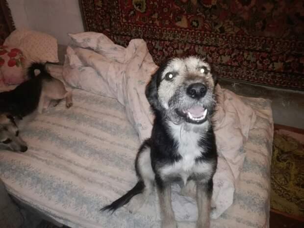 Девушка не могла пройти мимо обездоленных животных, и теперь у нее дома живет уже четыре собаки