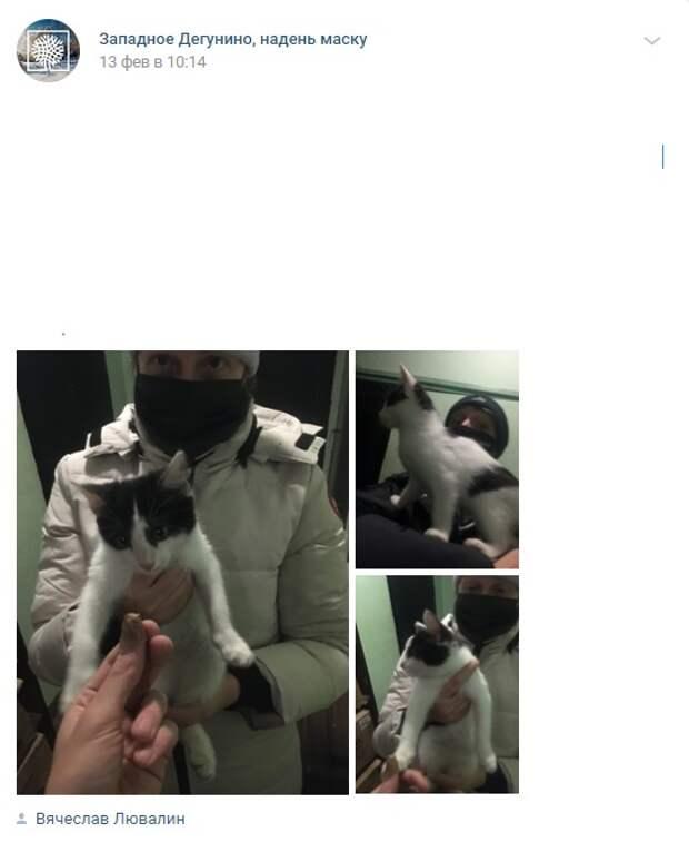 Фото дня: на улице Ивана Сусанина кот обрел свой дом