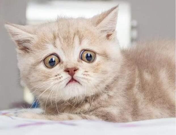 От любопытства глаза велики: котенок с огромными глазищами нашел свое счастье