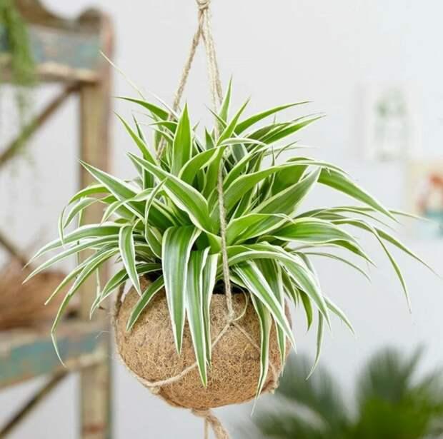 10 неприхотливых растений для поддержания свежести воздуха в помещении