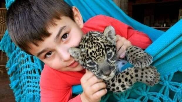 Тьяго Силвейра: история мальчика, который живет с ягуарами