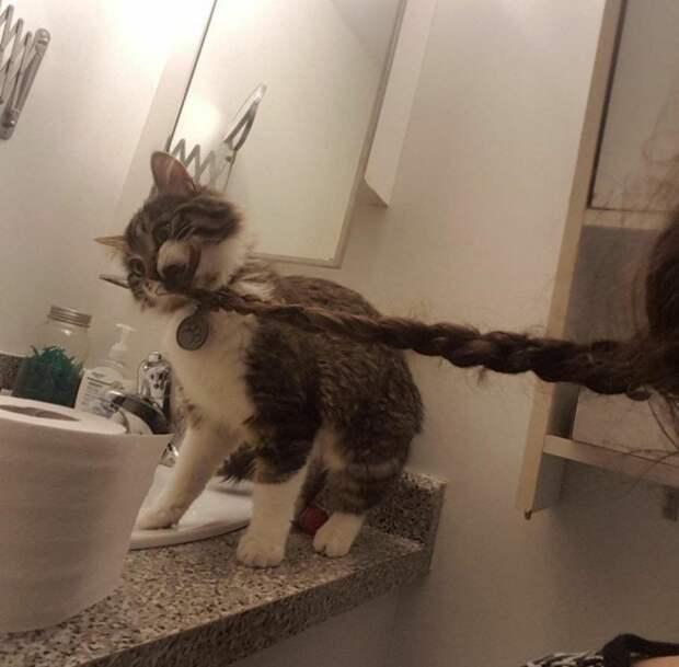 """Кот - это синоним слова """"наглость"""""""