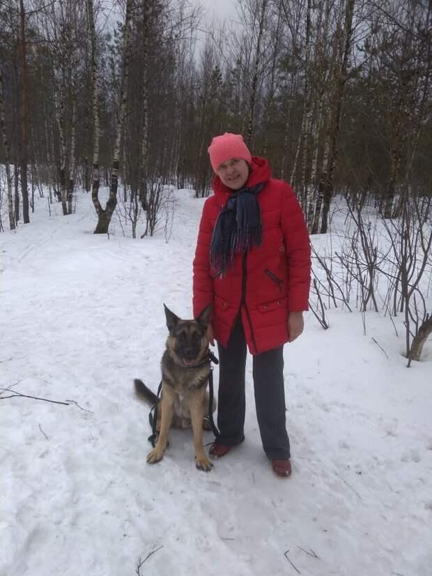Ночью к воротам приюта подкинули одинокого замерзшего щенка история, овчарка, приют, собака, щенок