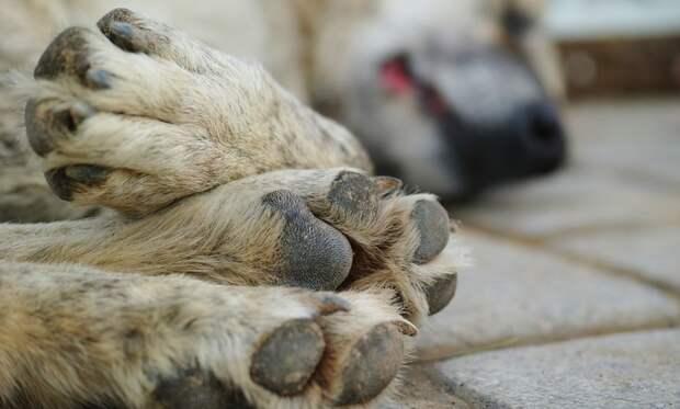 Неизвестные расправились с бездомными собаками в Крыму