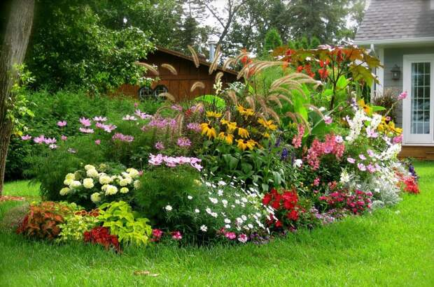 ТОП-11 лучших растений для фасада вашего дома (Фото)