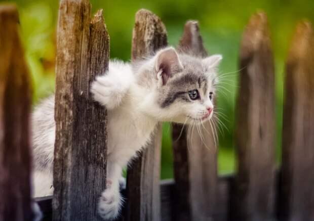 котенок смотрит через забор