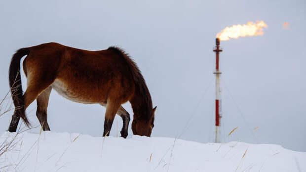 Силуанова спасёт только нефть
