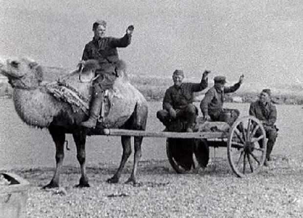 Как красноармейцы воевали на верблюдах в Великую Отечественную