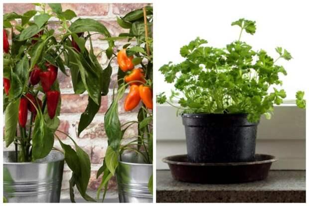 Домашний огород: 7 полезных и вкусных растений, которые можно выращивать на подоконнике