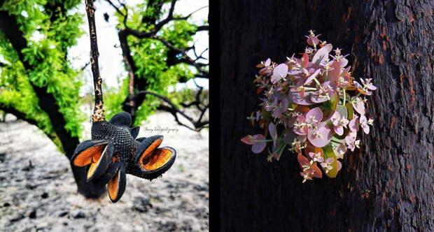 Как природа Австралии пытается оправиться после разрушительных пожаров