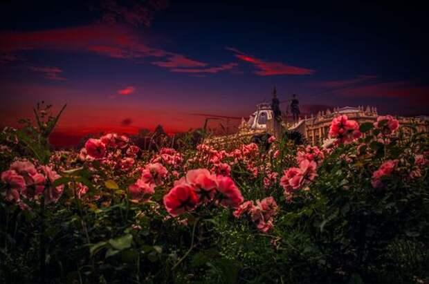 Золотя заката розы... Иннокентий Анненский