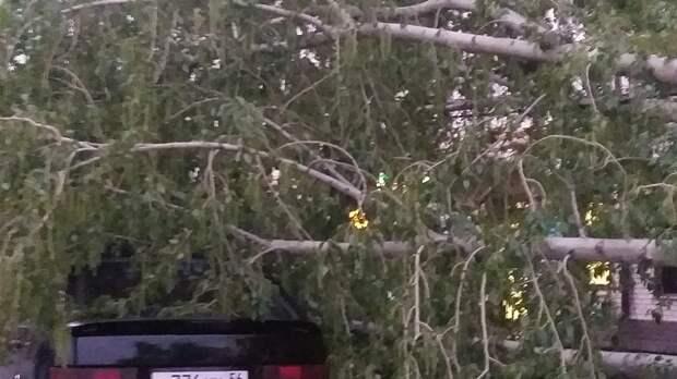 """Жительница Бузулука: """"Я только села, и деревом накрыло нашу машину"""""""