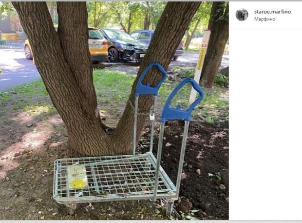Фото дня: на Малой Ботанической пристегнули тележку к дереву