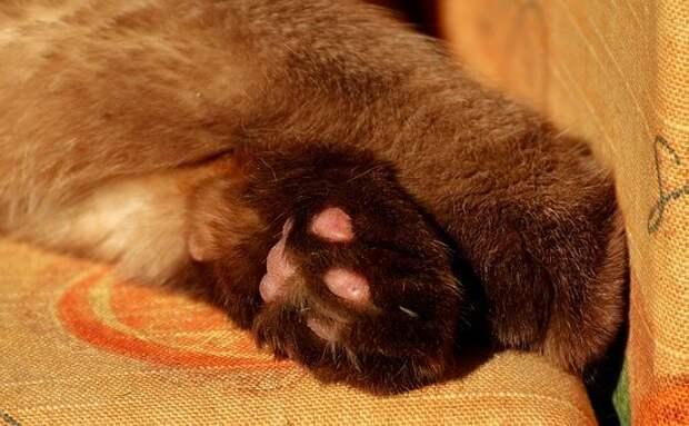 Тестирование кота оказалось последним. Жорик доказал, что он настоящий