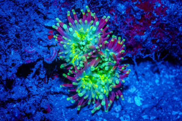 «Аватар» подводного мира: необычные светящиеся существа морей
