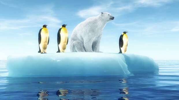 Федерация регби России одобрила проведение турнира на территории Антарктиды