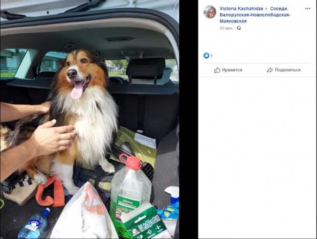 Вторая собака за неделю попала на ТТК в Беговом