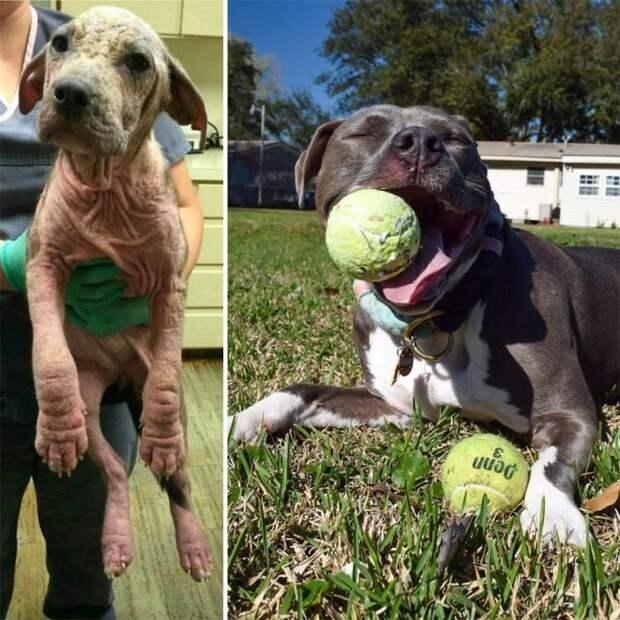 Топ-10 фотографий собак до и после приюта. Эти снимки трогают до глубины души