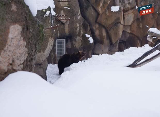 Итоги дня: пробуждение ижевского медведя Гоши, фестиваль фейерверков и ремонт дорог в 2021 году