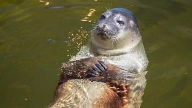 Ученые подсчитают количество новорожденных тюленят в заповеднике на Камчатке