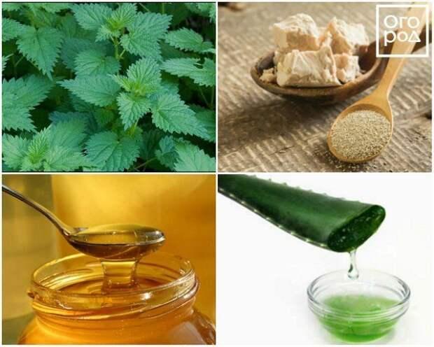 Природные стимуляторы роста для растений: крапива, дрожжи, мед, алоэ
