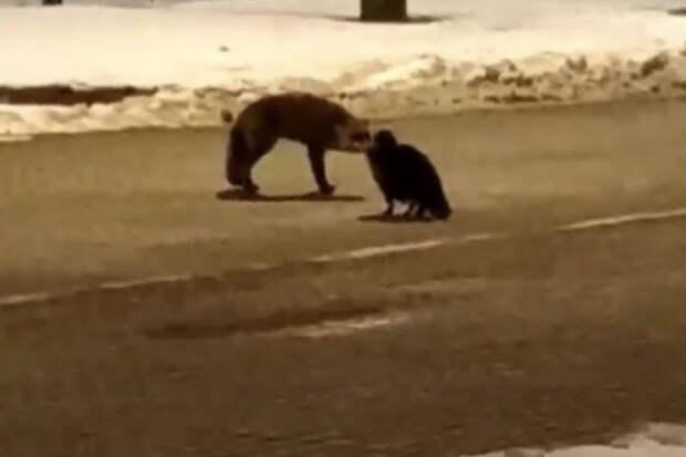 Российский кот и польская лиса устроили бой за колбасу