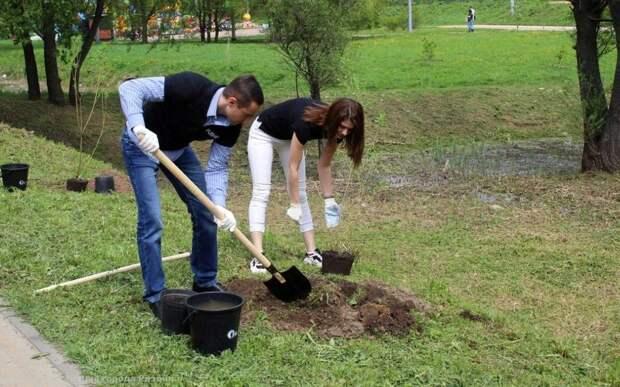 В рязанском сквере высадили 10 плакучих ив