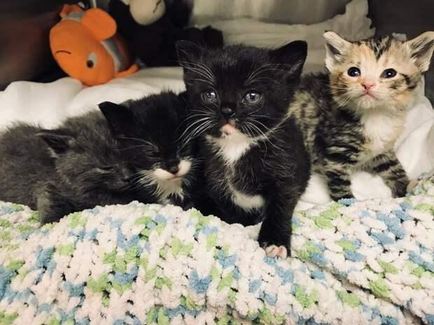 Спасение маленьких осиротевших котят, оказавшихся в щели между домами