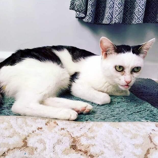 По словам Джен, кошка была застенчивой, но очень милой. К тому моменту ей уже исполнилось два года и все это время она прожила в приюте Стив Бушеми, забавно, забавное сходство, кошка, напоминает, необычная внешность, необычная морда, сходство