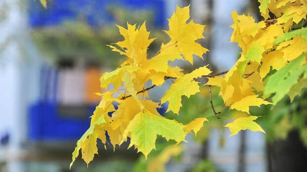Синоптик рассказал, когда в Москве начнется золотая осень