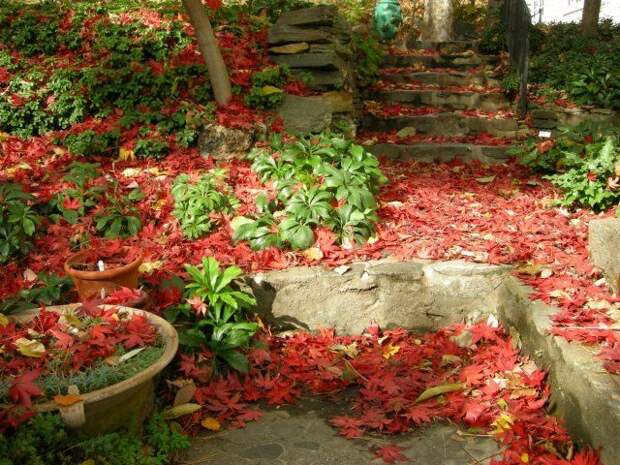 листва мульча
