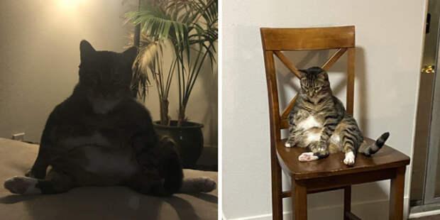 Хорошо сидят