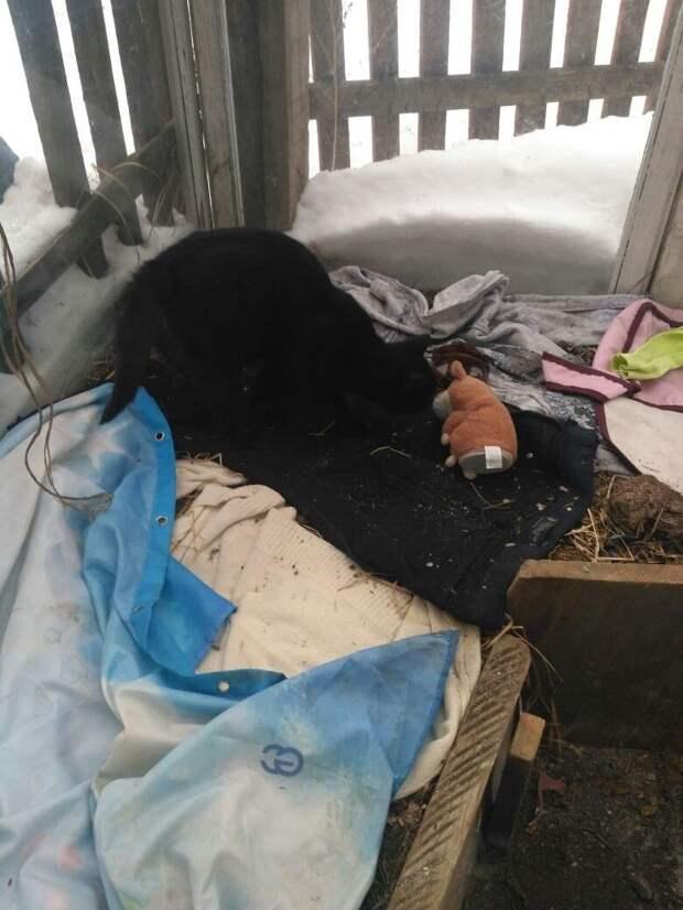 Дети хотели помочь беременной кошке… Но всё чуть не закончилось трагедией!