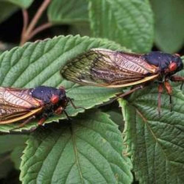 Удивительные навыки ниндзя у насекомых