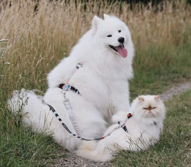 Дружба сварливого кота и вечно счастливого пса ошеломила Интернет