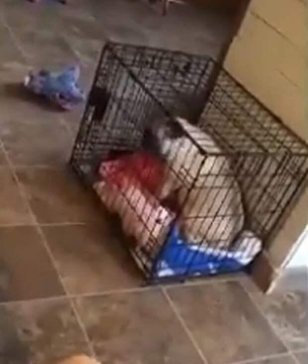 В доме стояла клетка для собачек, и питомцы нашли способ от нее избавиться