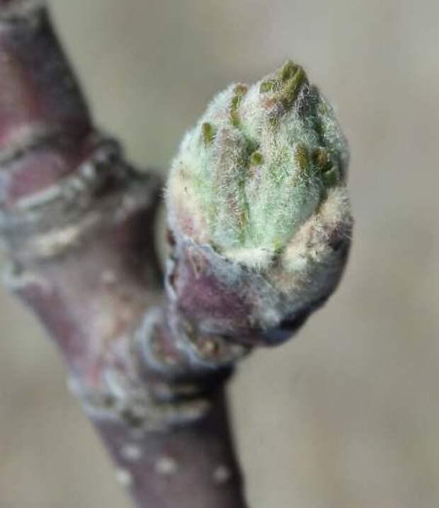 Весенний заговор против садовых вредителей и болезней